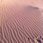 Kelso dunes - vaguelettes de sable