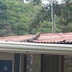 Enjoy the wildlife outside the hostel :-)