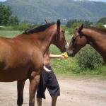 dando azucar a caballos
