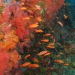 The Canyons Dive Site