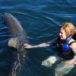 Touching the dolphin
