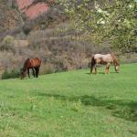 Caballos pastando en el campo de la casa