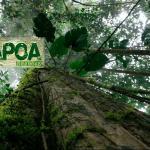 Itapoa Reserve
