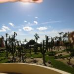 View of the Cactus Garden