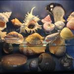 Seashell Museum (Musee des Coquillages), St-Jean-Cap-Ferrat