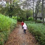 Leuke bos paden in het park
