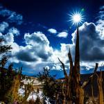 Bristlecone Forest in November