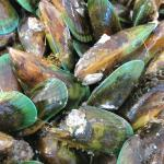 Green lipped mussel at the Auckland Fish Market