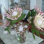 larger than life proteas smile at the guests