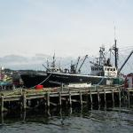 harbor view too