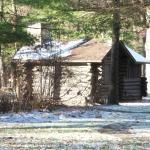 White Pines in November