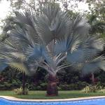 Palm tree giving shade to the swimming pool