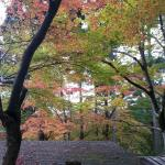 早めの紅葉が楽しめます。