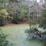 A quiet still water pond.