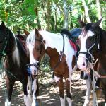 Painted Pony Horseback Tours