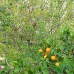 Foto de Il giardino dei mandarini