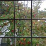 Particolare, vista da una finestra.