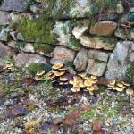 mur d'automne