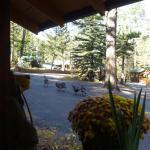 Wild turkeys we saw through our cabin window