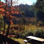 view from the cabin, afternoon, fall