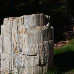 Petried Wood