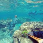Diving Kurrimine beach