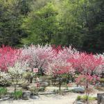 昼神温泉街風景 春