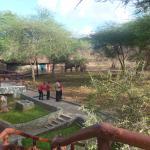 Elefanti fronte camera