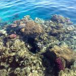 Коралл у Марины