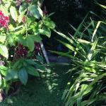 Diversidad de flores y plantas