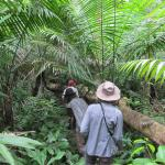 Walking in the primary Jungle