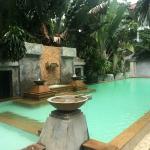 Top la piscine et la végétation