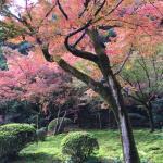 9年の歳月をかけて作られた茶室が九年庵と言われ、国の名勝。山の中腹にある別荘庭園はたくさんの紅葉に包まれてとても素晴らしい空間でしたが、思いのほか観光客が多すぎて、ヒーリング効果期待できません