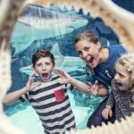 Kattegatcentret - Denmarks Sharkcentre