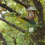 Active birdfeeder off the back porch.