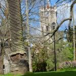 University chapel through the trees