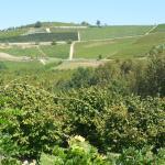 View of surrounding vineyards