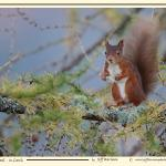 Red Squirrel at Sky Cottage