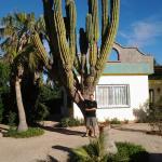 Great cactus!