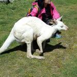 Kangguru albino