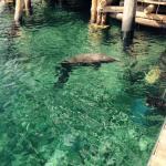 le delphinarium