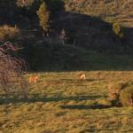 avistaje de ciervos en cabalgata