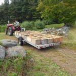 Orchard employee hauling loads of apples to sell