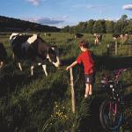 LFBike Path Biking Boywith Cows