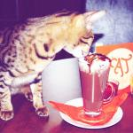 Photo of Cat Cafe