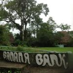 Banana Bank from the rive