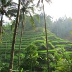 The Rice Field that you will be walking through :)