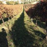 La Vigna Lunga - The Long Vineyard