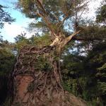 La rivincita della natura