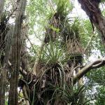 Cacti and epiphytes